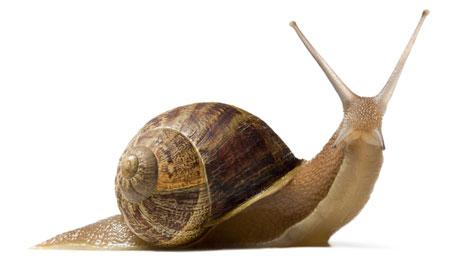 20130604-snail